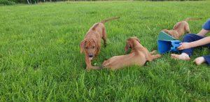 PUPPYS PLAYING